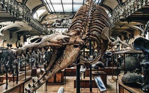 Muséum d'Histoire Naturelle et Grande Galerie de l'Evolution