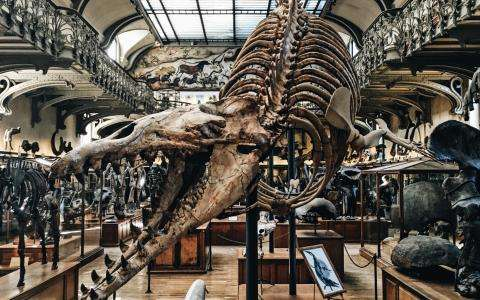 The Natural History Museum and its Grand Gallery of Evolution